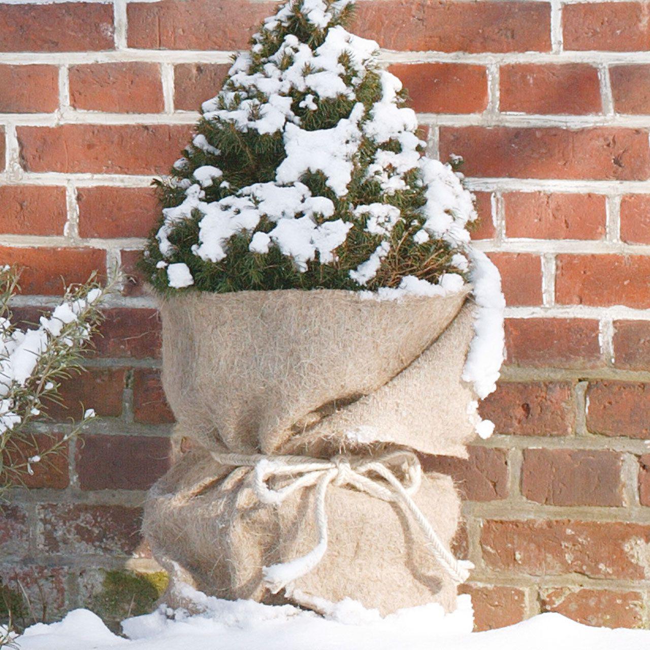 AFP Isolierfolie Winterschutz 50 x 300 cm//Noppenfolie//Luftpolsterfolie//Frostschutz K/übelpflanzen//K/älteschutz Blument/öpfe 2 Jutes/äckchen gratis