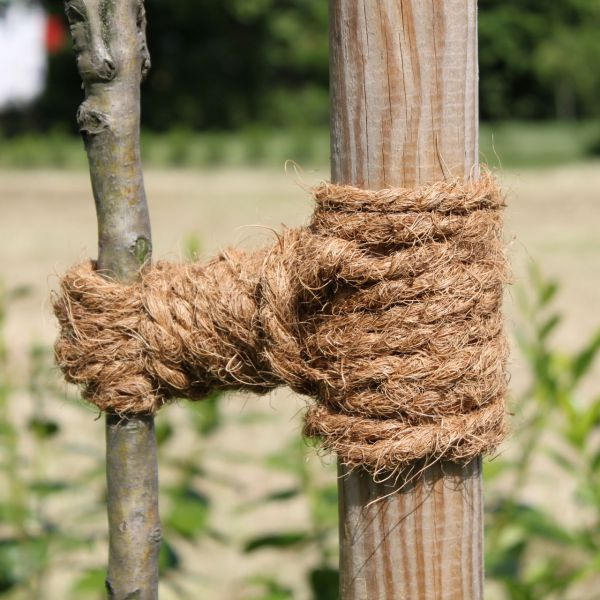 Kokoskordel Baumbinder 15m natur