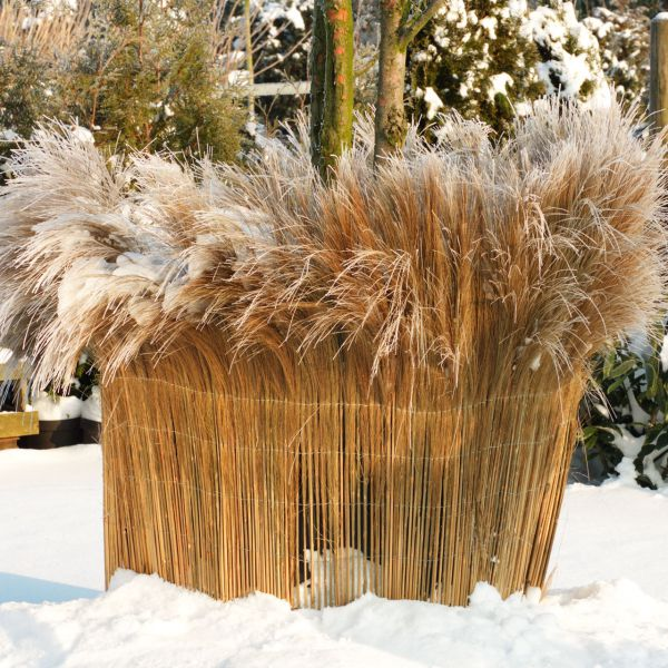 Winterschutzmatte California naturbelassene Farnmatte natur