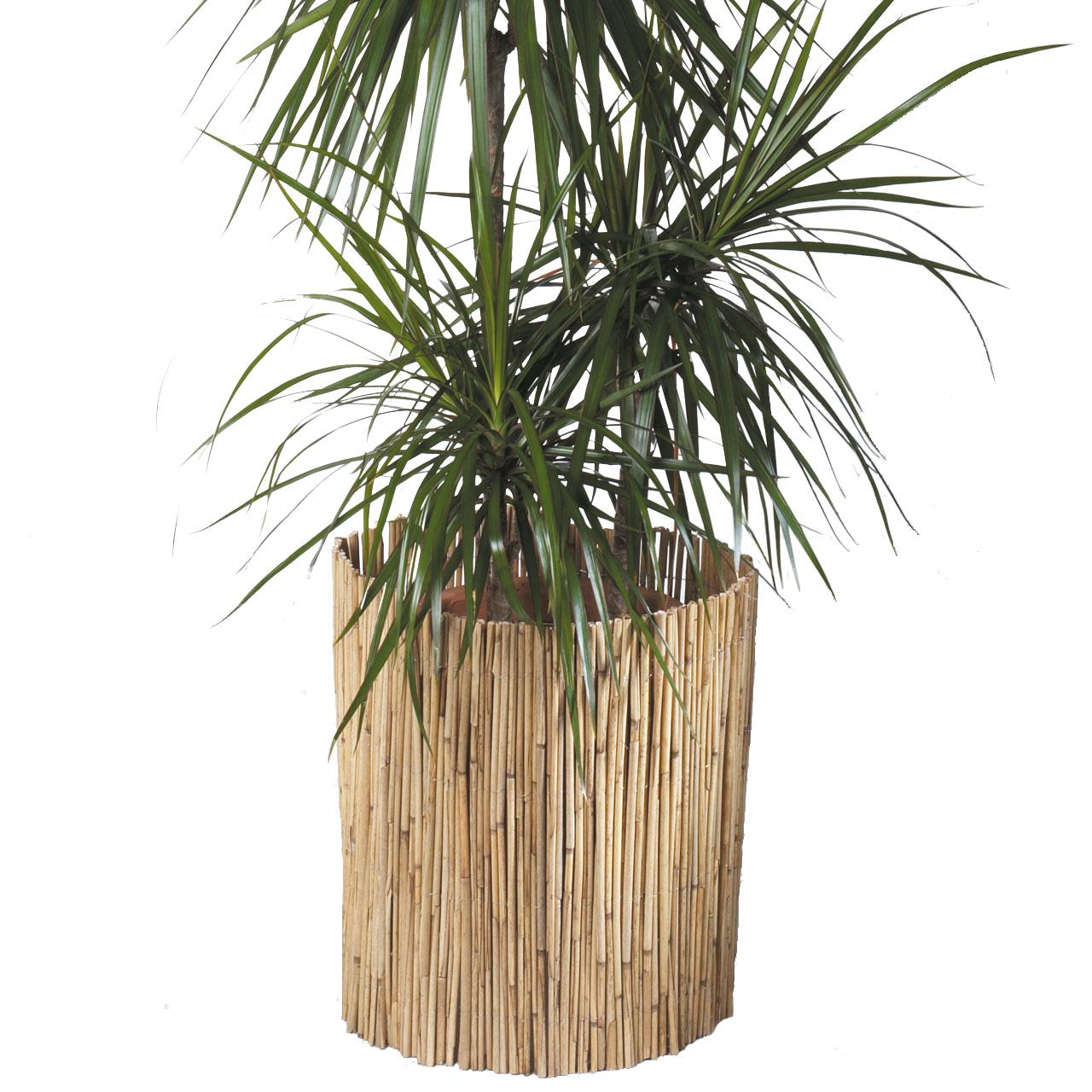 Schilfrohrmatte Winterschutz Pflanzen Natur Winterschutz De
