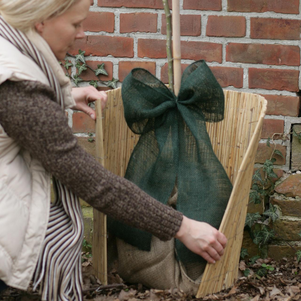 schilfrohrmatte winterschutz pflanzen natur. Black Bedroom Furniture Sets. Home Design Ideas