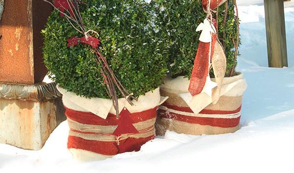 Winterschutz für Pflanzen- so geht´s | winterschutz.de